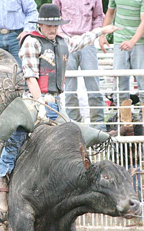A bull rider tries his luck. Photo by Joe Flanagan.