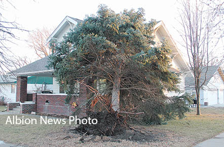 Large tree was uprooted and came to rest on the Dan and Shelley Lueken home.